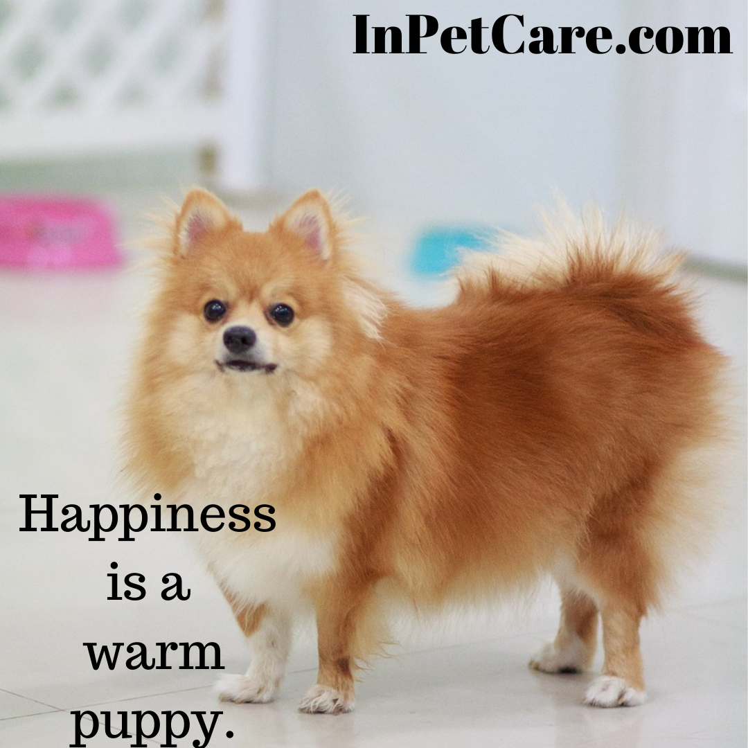 happiness is a warm puppy. cute dogs cute dog names cute