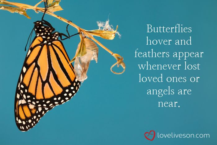 Memes To Remember Our Loved Ones Now And Forever Butterfly Quotes Forever Love Quotes First Love