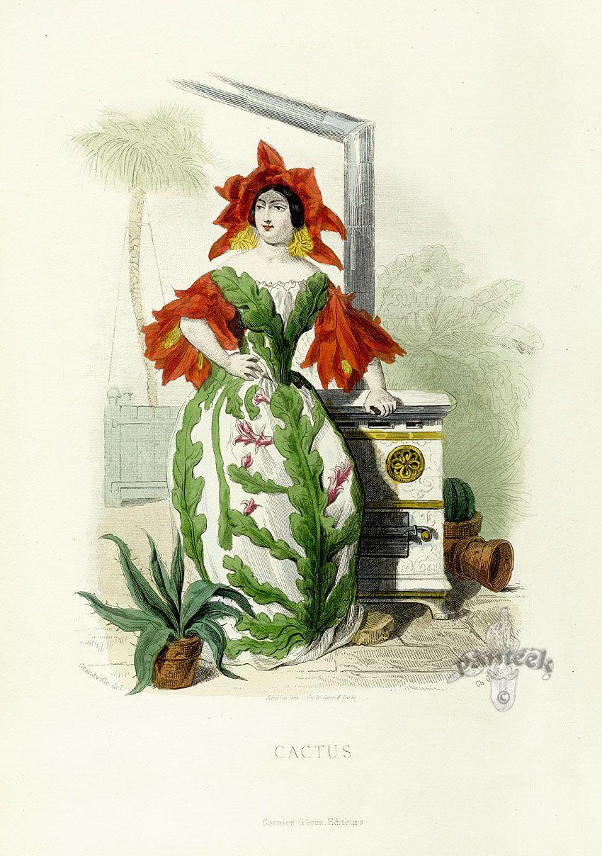 JJ Grandville  'Cactus' flower