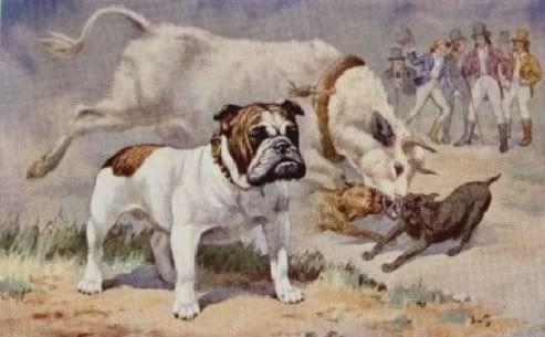 Olde English Bulldog Head The Early Bulldogs Bulldog Breeds