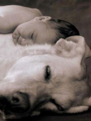 Sleeping Baby And Dog Hugs And Cuddles Animals Friends Cute Dog Photos