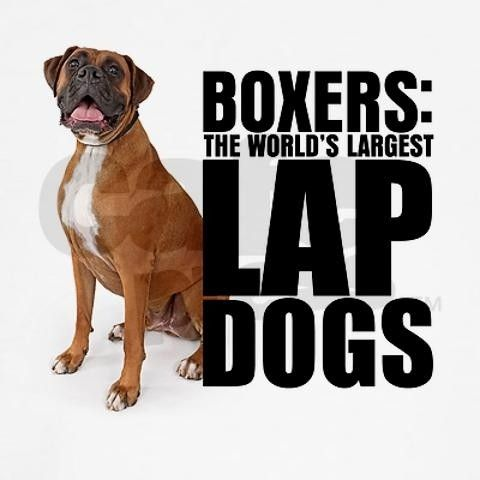 Its so true! I know someone with a boxer, and when he was