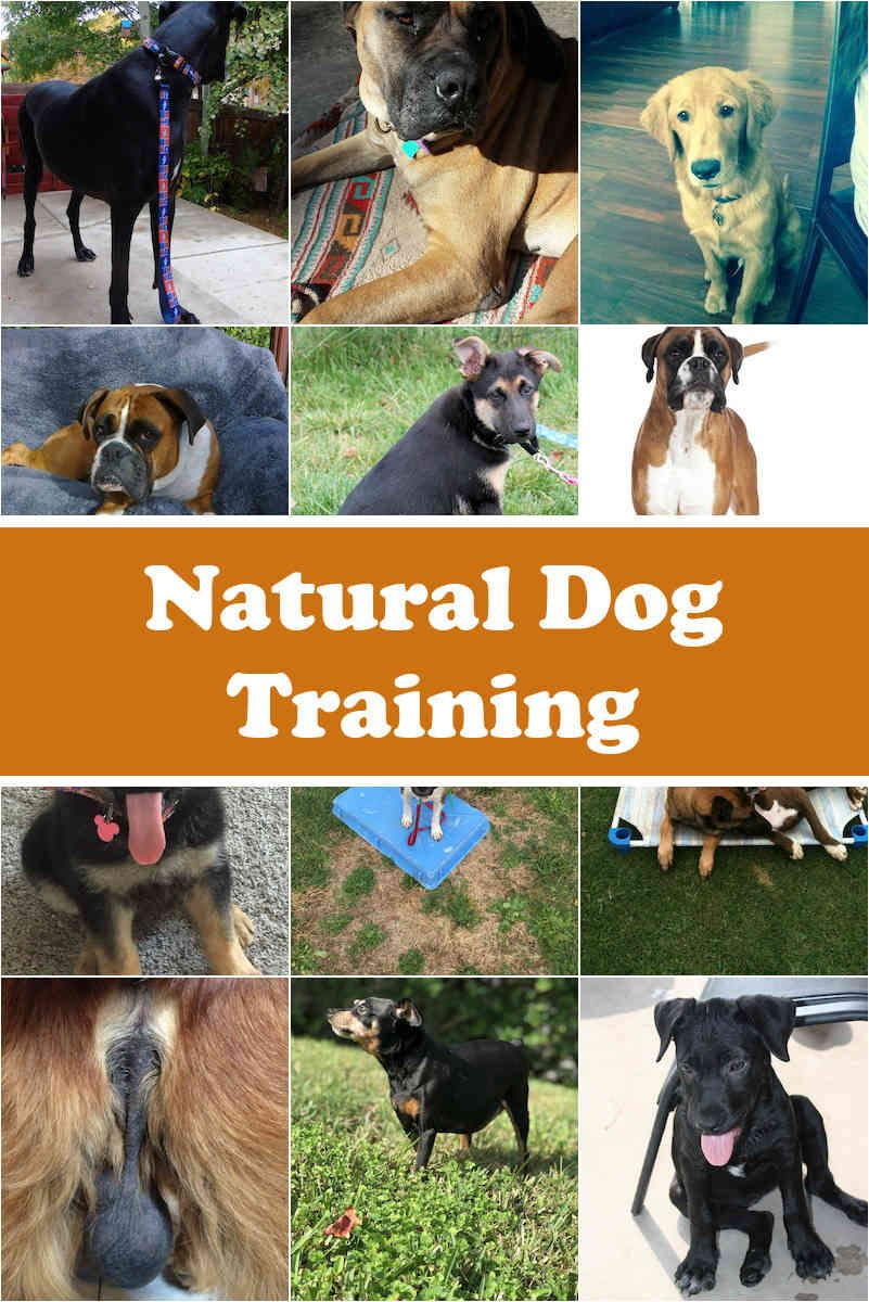 Dog Training Basic Guidelines For New Dog Owners Dog Training