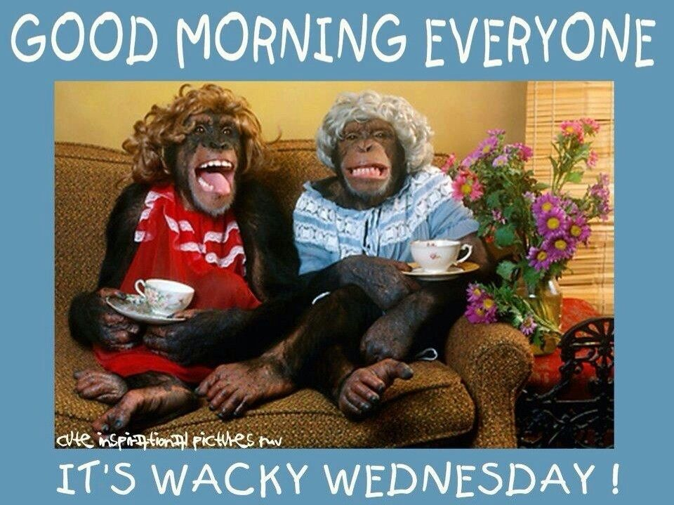 Wacky Wednesday Quotes - Bing Images | Good morning ...
