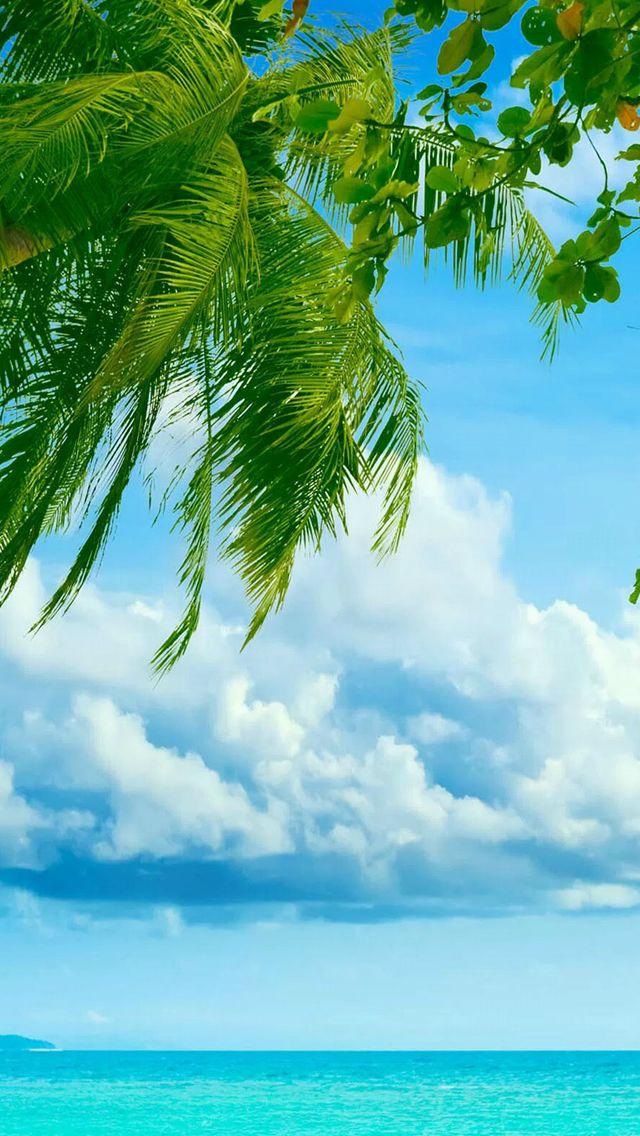 Tropical Beach Coconut Tree IPhone 5s Wallpaper