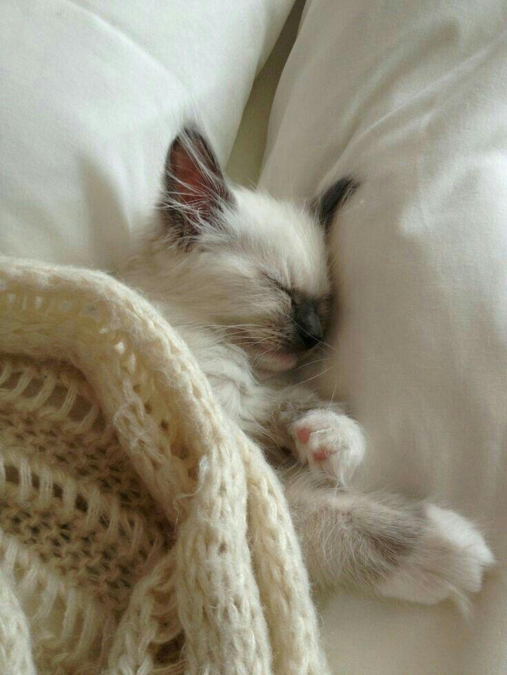 Pin Von Mia Auf Vanilla Cream Cottage Katzen Katzenbabys Niedliche Katzchen