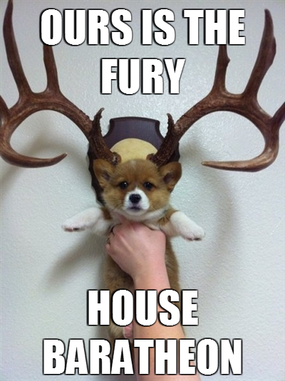 OHMYGOD TWO OF MY FAVORITE THINGS COMBINED #corgi #A Song of Ice and Fire