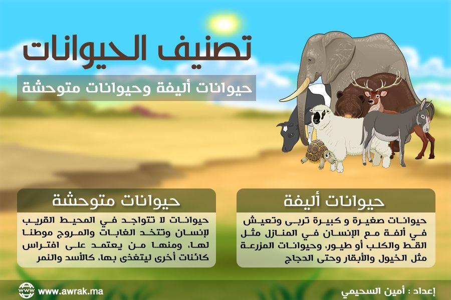 جدارية تصنيف الحيوانات Activities For Kids Preschool Activities