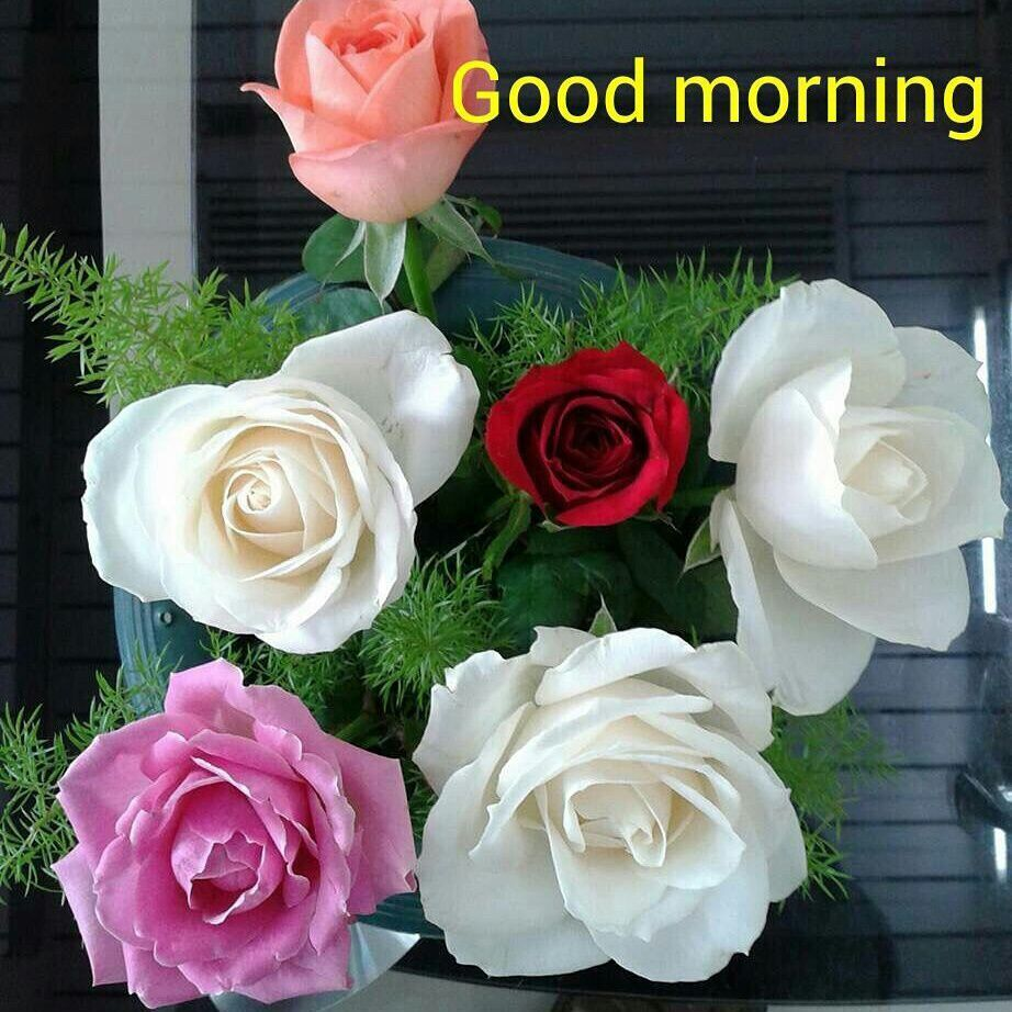 good morning images flowers morning pictures good morning wishes g morning night