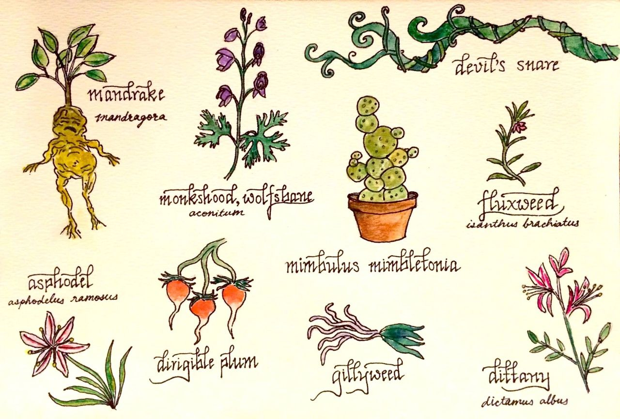 Harry Potter Herbology Harry Potter Creatures Harry Potter