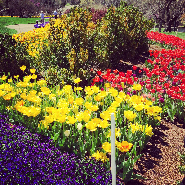 Ordinaire Cheekwood Botanical Gardens Nashville TN Tulips In Spring