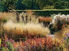 Fluffy plumes of Deschampsia caespitosa grass set off the silhouette of dark late-season Veratrum californicum, a handsome, graphic plant when left to go to seed. Piet Oudolf's garden.