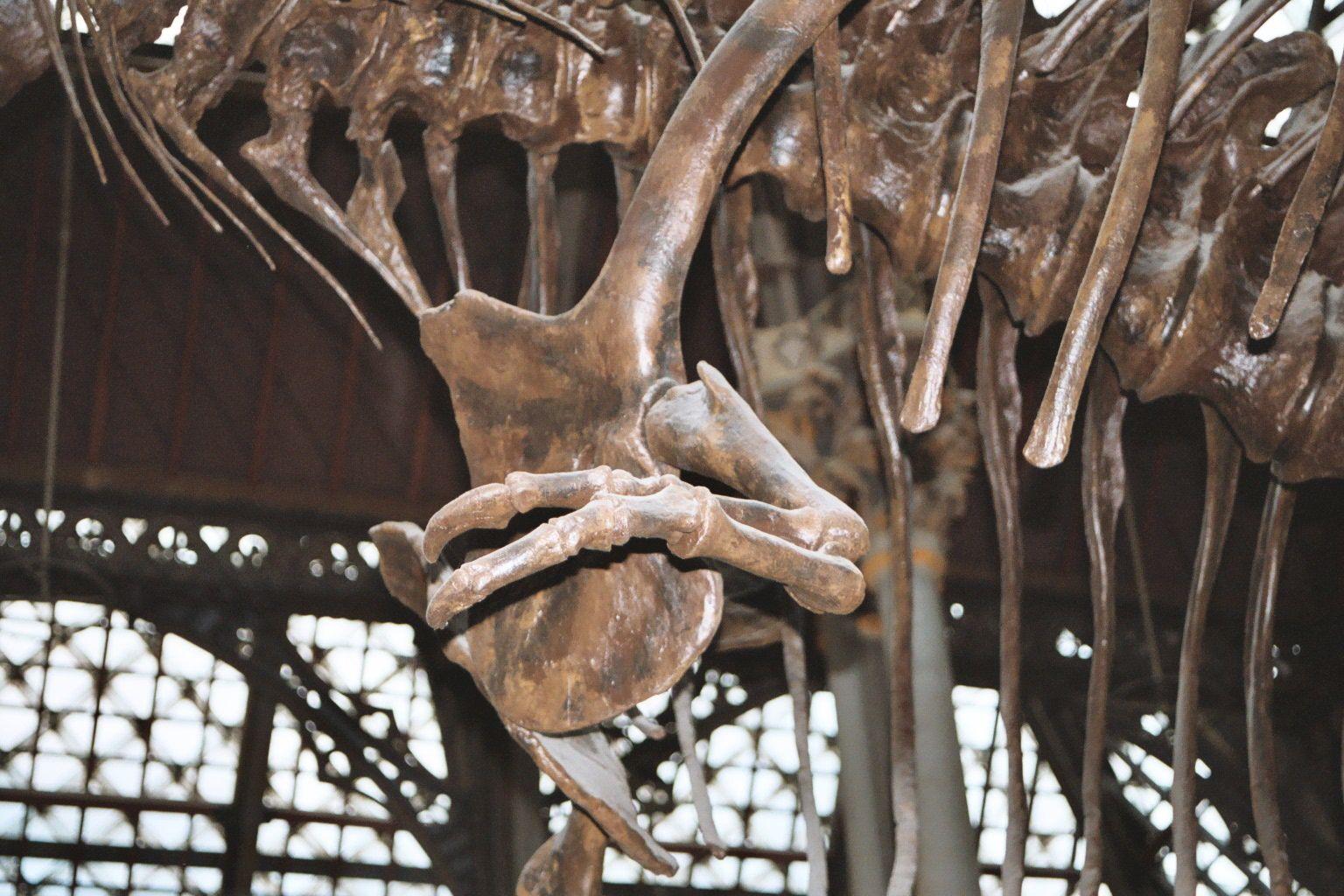 rexmanus 1536×1024  moose art rex drawing reference