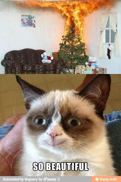 Grumpy Cat Yay Meme : It will be published if it complies with the content rules and our moderators approve it.