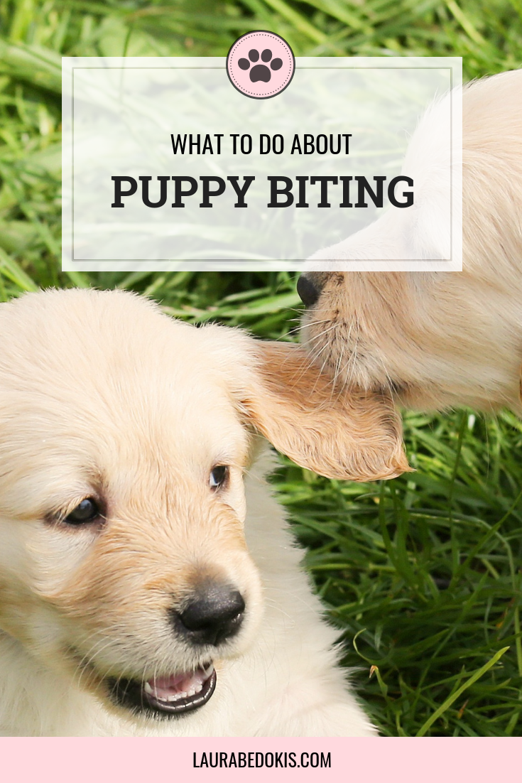 Things You Can Do About Puppy Biting Today Puppy biting