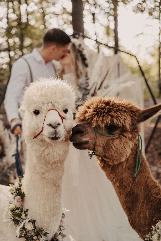 Lama Liebe Hochzeitsmotto Herbsthochzeit Winterhochzeit