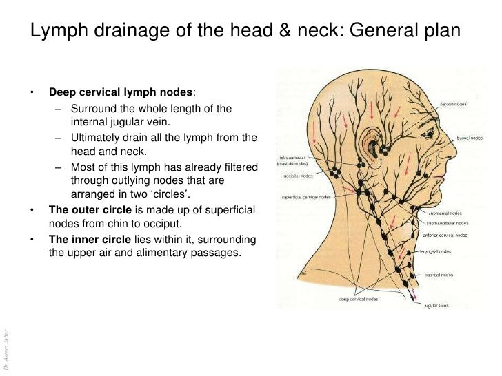 Lymph drainage of the head & neck: General plan • Deep cervical ...