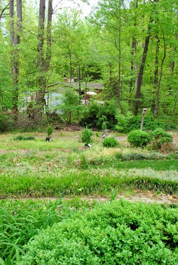 Young House Love | Planting A Few Leyland Cypress Trees For Added Privacy