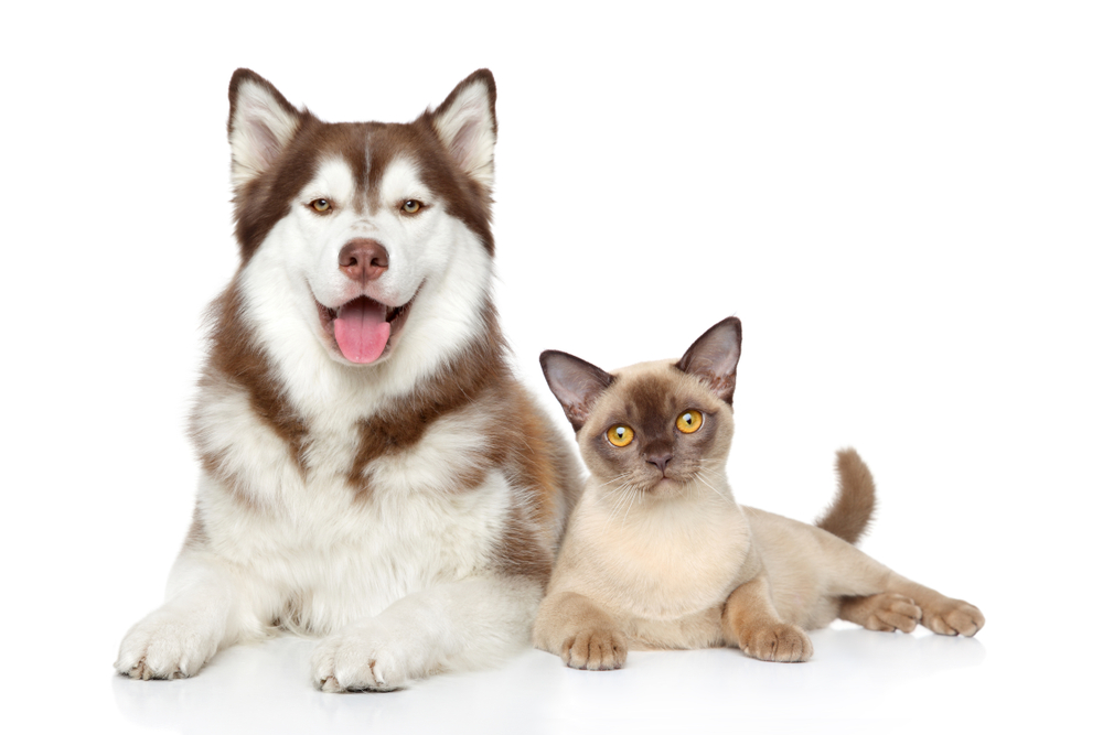 Cat Dog Together Lying On White Dogs Cats Dog Images