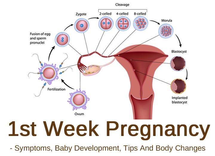 Signs of 1 wk pregnancy