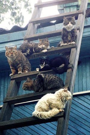 Cat Gang Kedi Kopek Cats