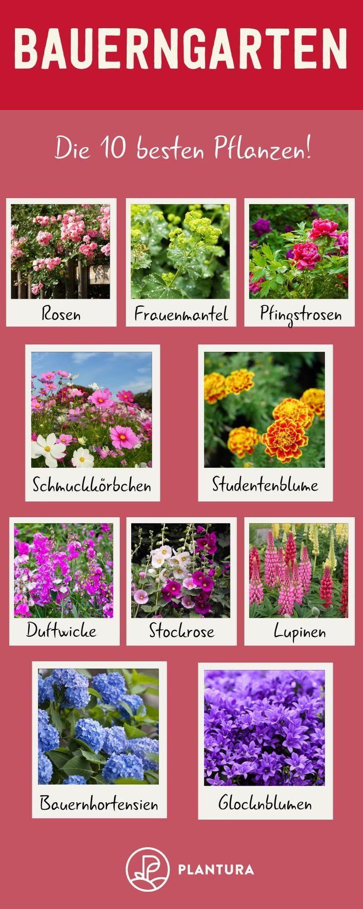 Bauerngarten: Die besten Pflanzen & Tipps zum Anlegen - Plantura