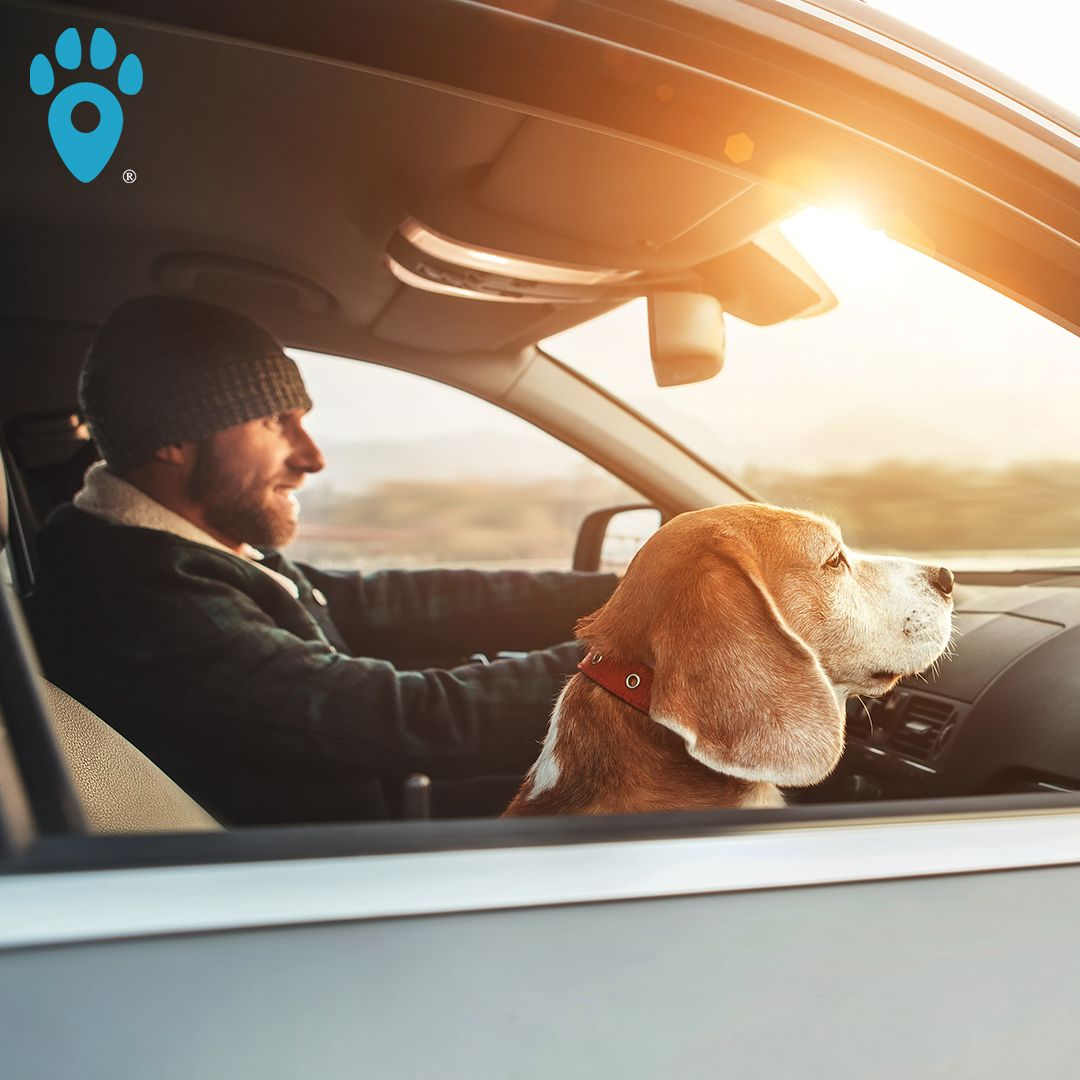 Maybe One Day Dad Will Let Me Drive Pettag Pawrents Petlost Petalert Saveyurpet Findmypet Pets Petstagram Petsofinstag In 2020 Pet Tags Cat Mom Cat Dad