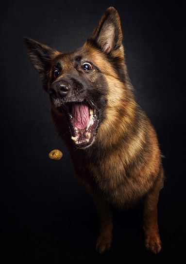 Mild Panic | Dogs Photographed Catching Treats