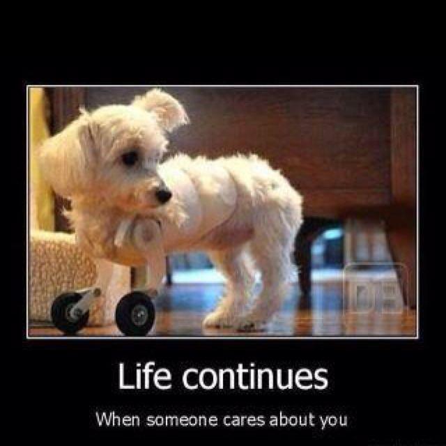 Poor puppy, but how true.