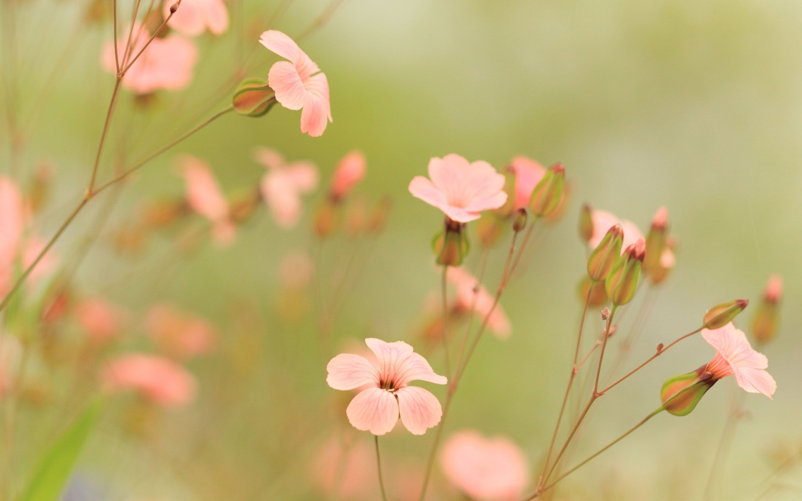 awesome summer flowers Part - 4: awesome summer flowers photo gallery