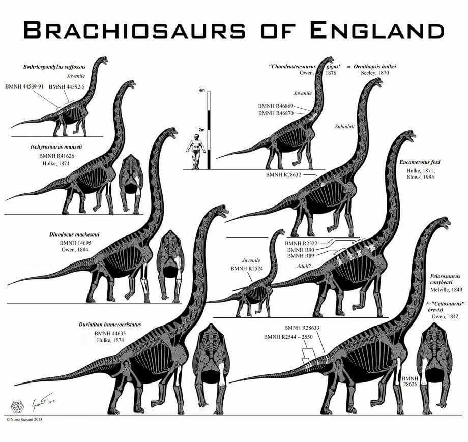 Brachiosaures d'Angleterre par Paleo-king.