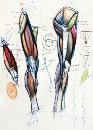 Character Design Collection Legs Anatomy Ortopdist Pinterest