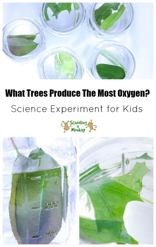 Tree Unit Study and Science Experiment