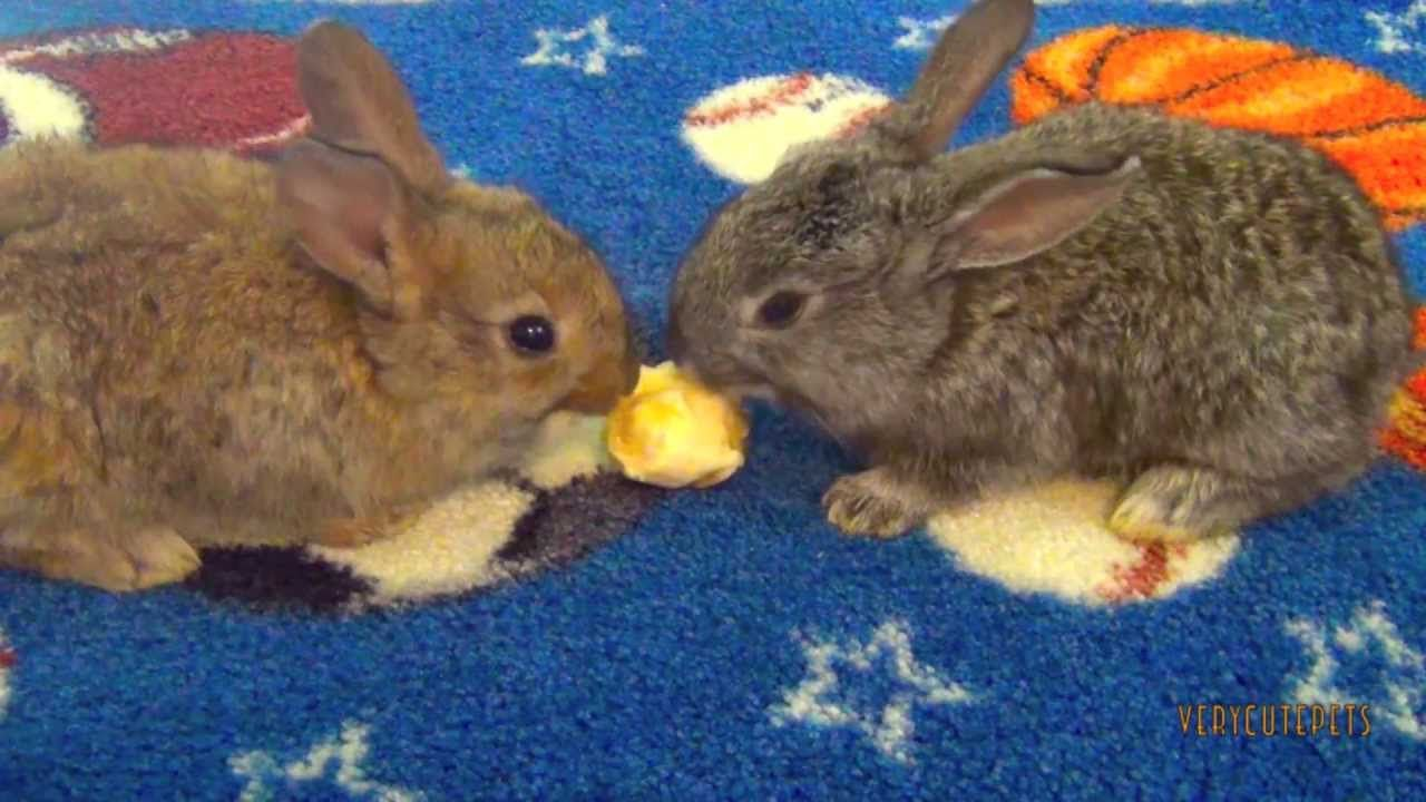 Baby Bunnies Eating Bananas Two Bunny Rabbits Fighting Banana