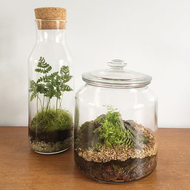 cr ez et fabriquez votre terrarium de plantes jardin pinterest terrarium terrarium. Black Bedroom Furniture Sets. Home Design Ideas