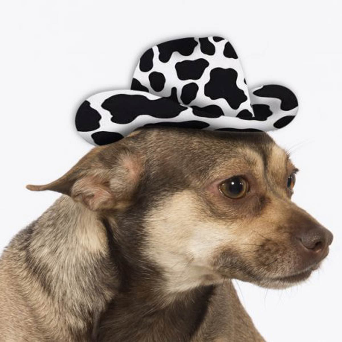 Hat with Dog Dog Gifts Festival Hat Dog Hat Dog Beanie Animal Festival Hat Festival Accessories