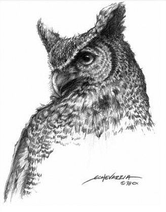 great horned owl jpg 328a 418 drawing pinterest owl drawings and owl art