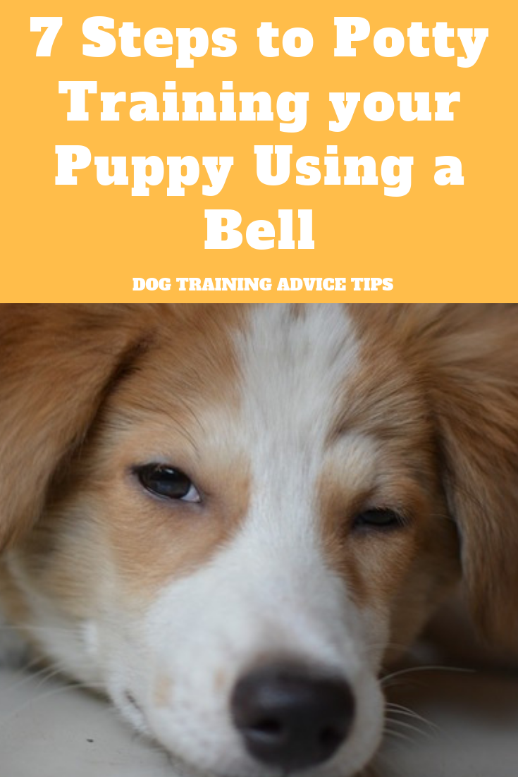 7 Steps To Potty Training Your Puppy Using A Bell With Images Dog Training Advice Training Your Puppy Potty Training Puppy