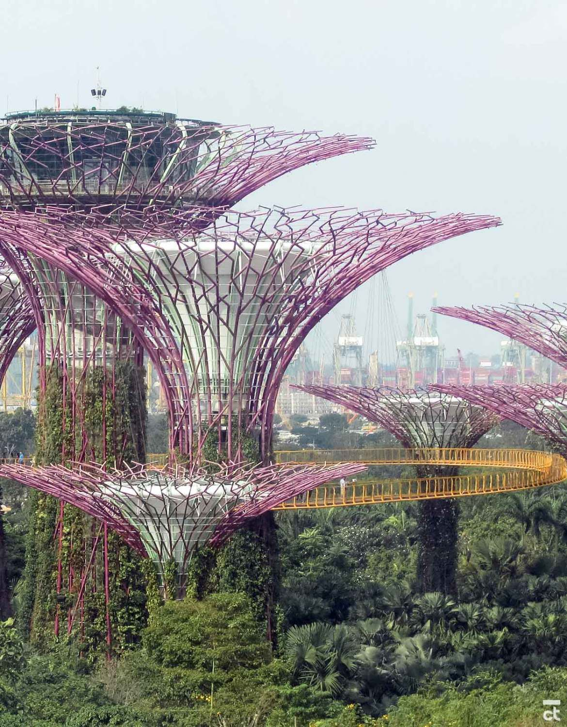 Gardens by the Bay & Supertrees in Singapore: What You Must See #botanicgarden