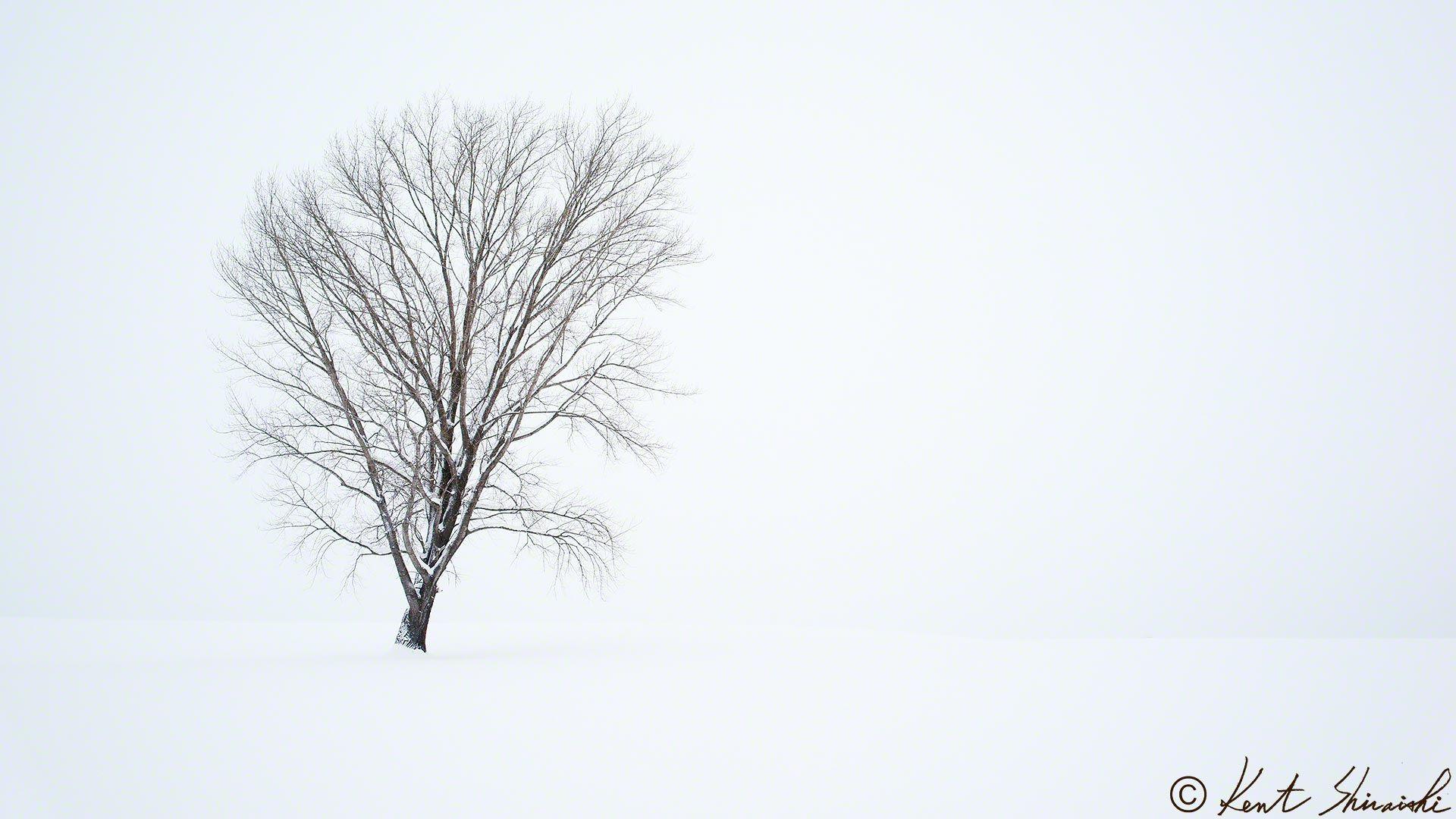 哲学の木が無くなりました! - Kent Shiraishi Photo Studio