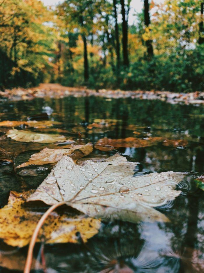 ▷ 1001 + ideas de paisajes de otoño en 100 fotografías de ensueño