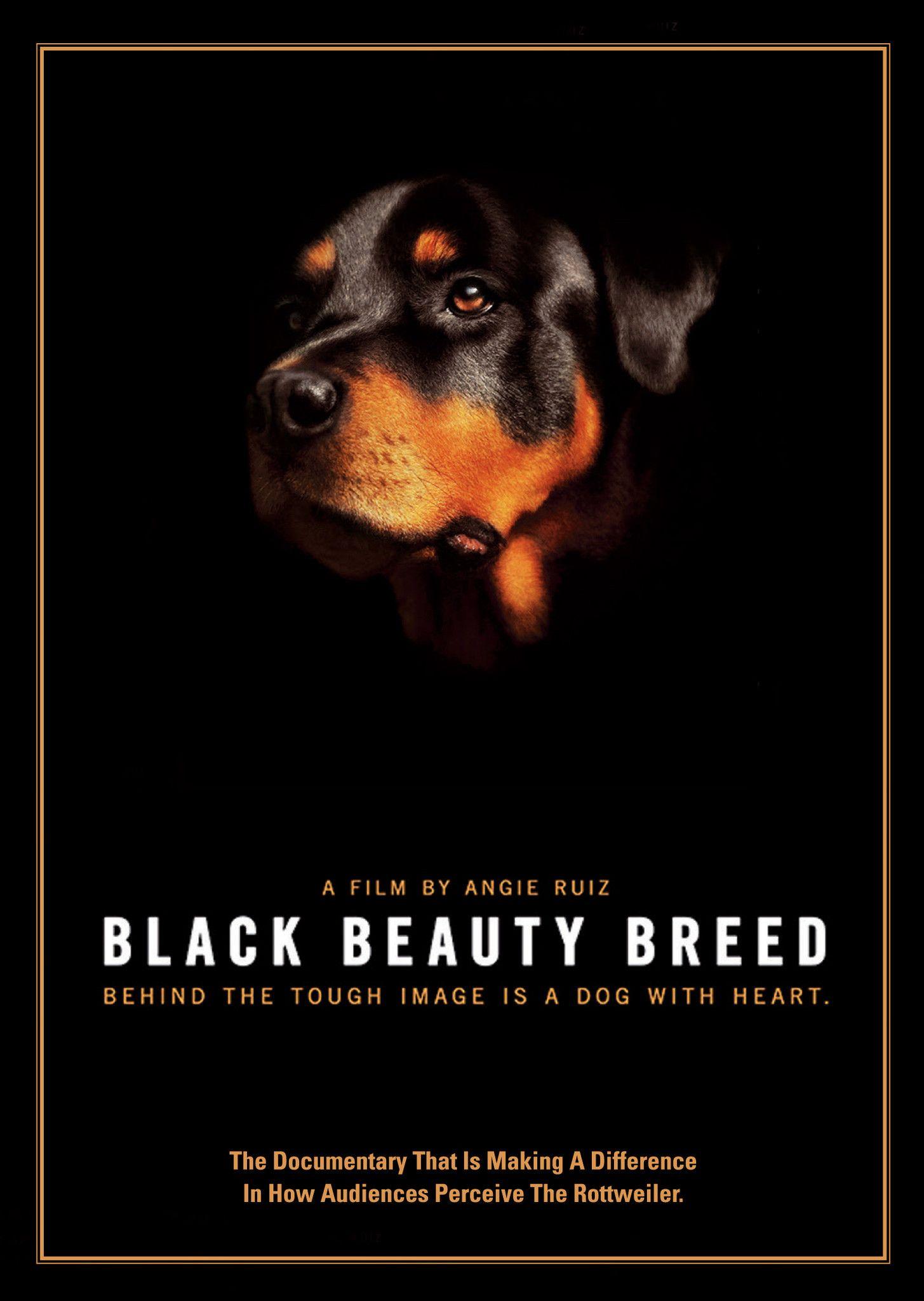 Black Beauty Breed DVD Black beauties, Breeds