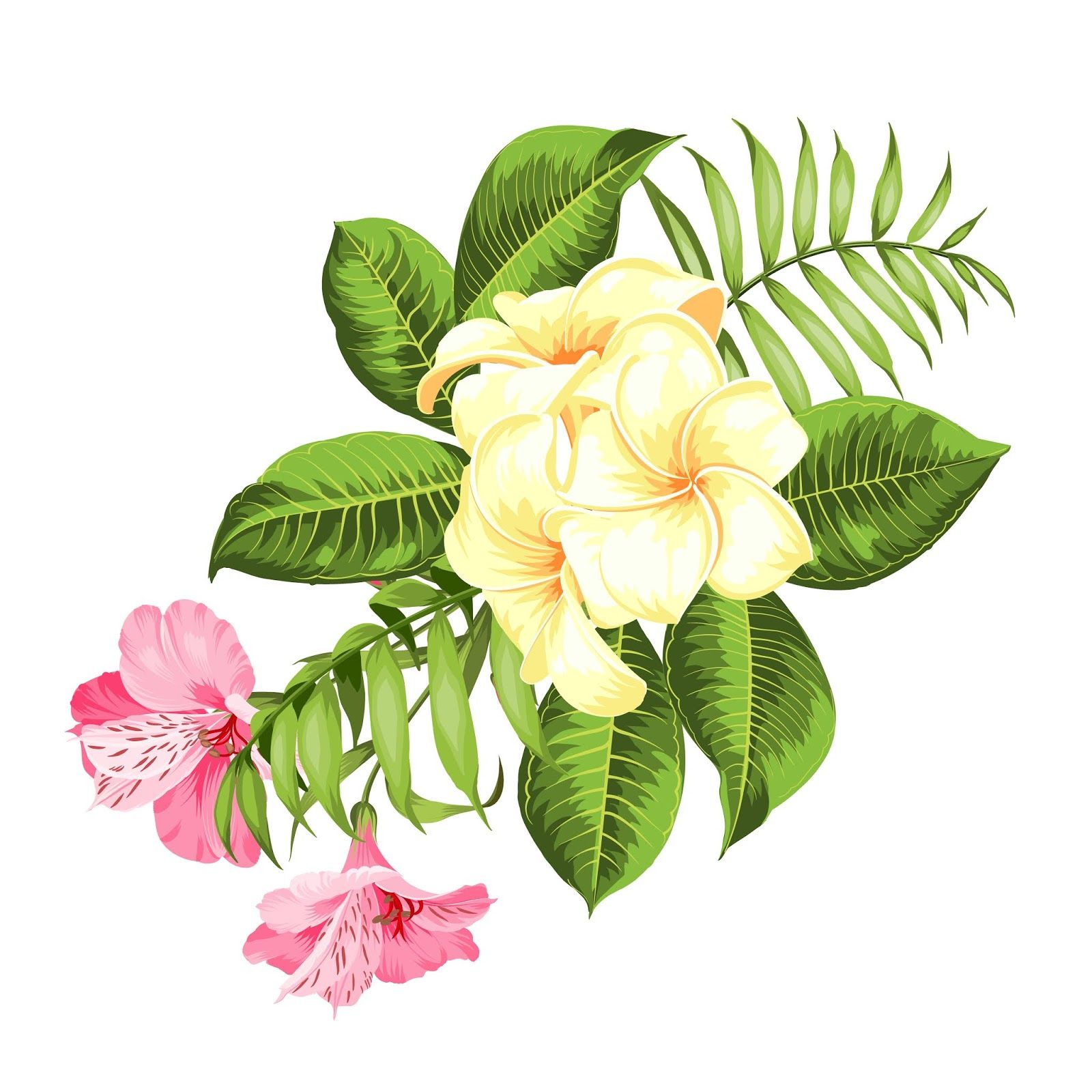 Tropical Flower White Background Vector Illustration Free Download Vector Cdr Ai Eps And Png Formats