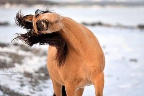 Image Result For Spirit Stallion Of The Cimarron Tattoo Spirit