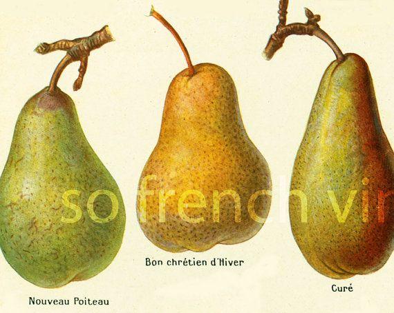 1922 Antique Pear Print Pears Wall Art Vintage Lithograph Fruit Decor Ilration Larousse