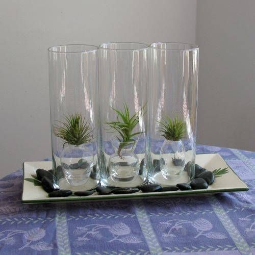 air plant display gallery of terrarium pictures air plants terraria and plants