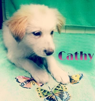 Meet Cathy A 2 Months 21 Days Collie Rough Mix Available For Adoption In Kingshill Vi Adoption Animals Furry Friend