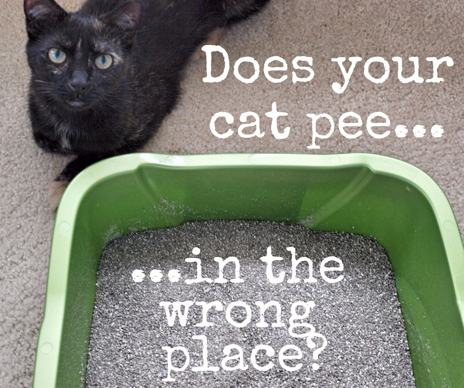 How To Get Rid Of Sour Cat Urine Odor For Good Cat Urine Cleaning Hacks How To Clean Carpet