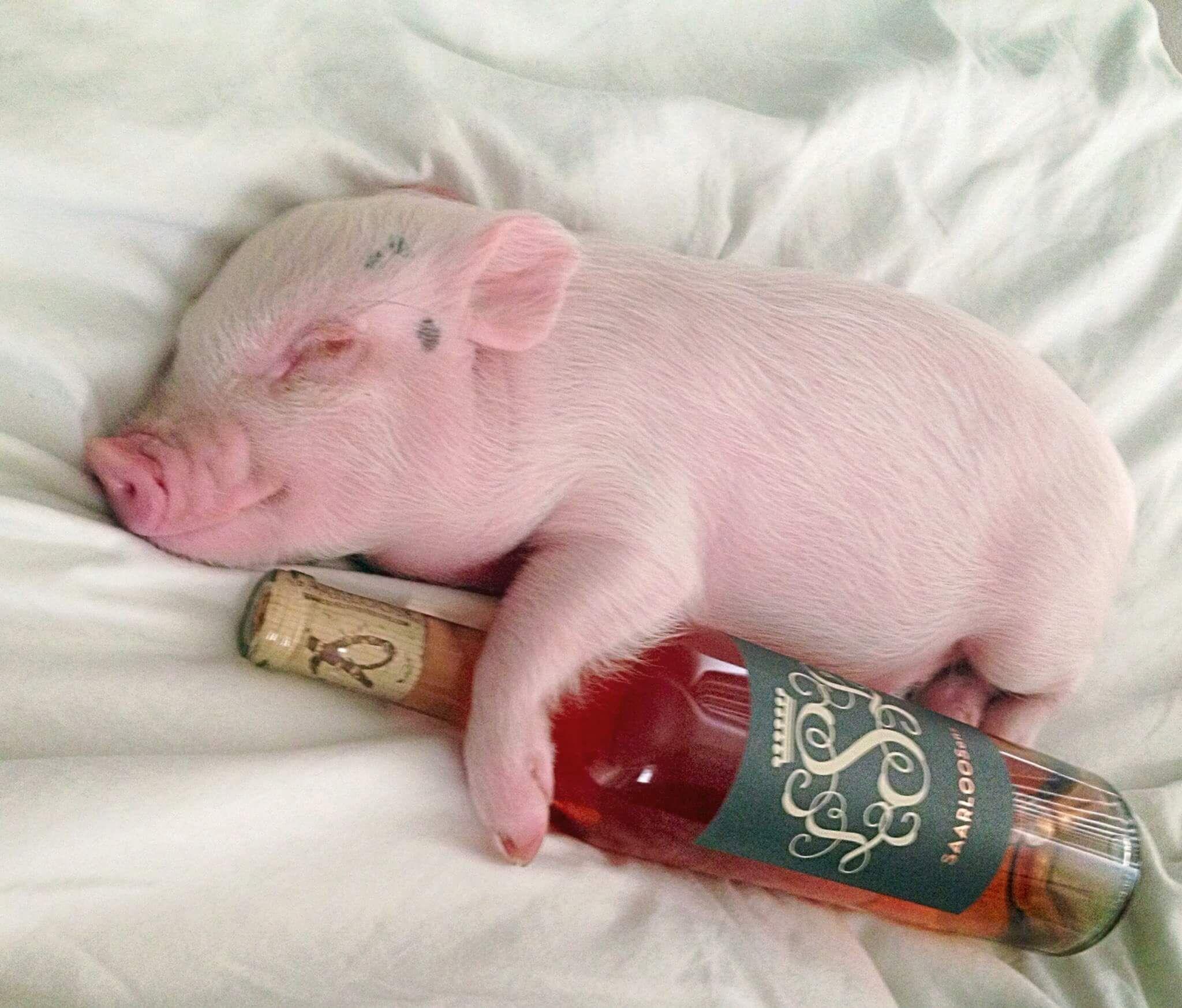 Прикольные картинки со свиньями с новым, поздравления днем