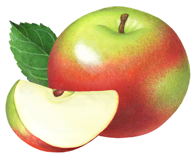 Pin On Apple Illustrations Used For Packaging